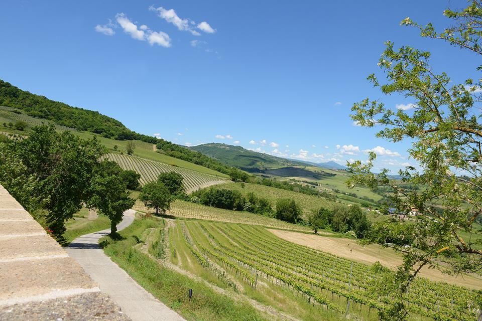 altarocca-wine-resort_1